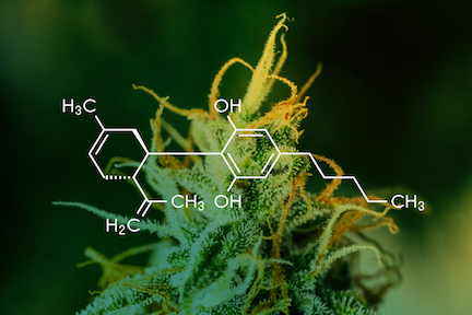 Medical Cannabis: Therapeutic Utility and Risks